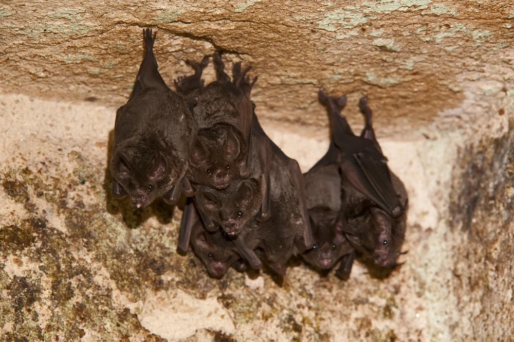ft. laud bats