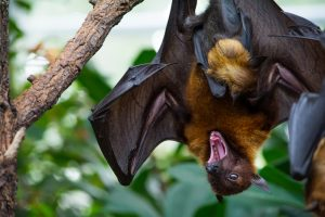 FTL Bats